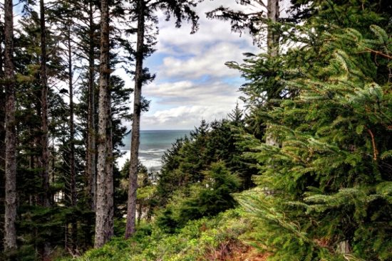 Oregon Coast Forest