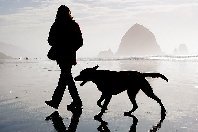 Owner and dog walking the beach near the surf